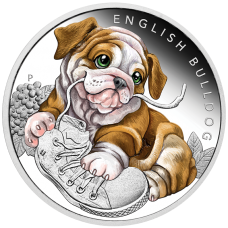 2018 50c Puppies - English Bulldog