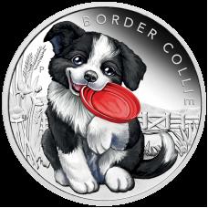 2018 50c Puppies - Border Collie
